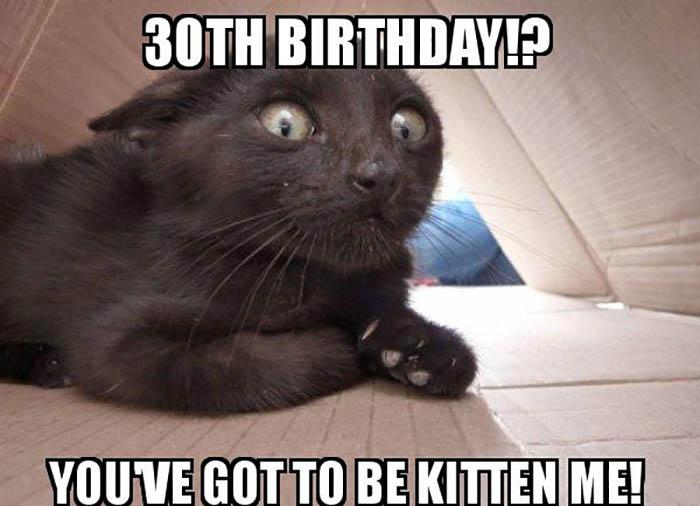 30th birthday meme funny cat