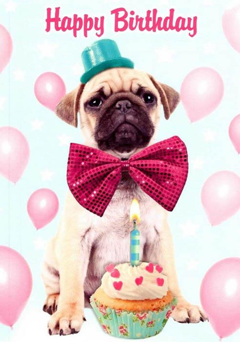 funny birthday meme dog