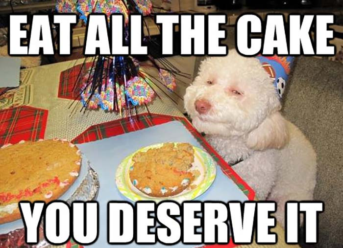 Dog-Birthday-Cake-Meme-Funny-Image