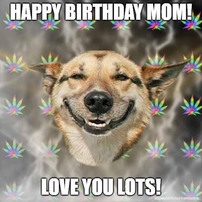 Dog meme happy birthday for mom