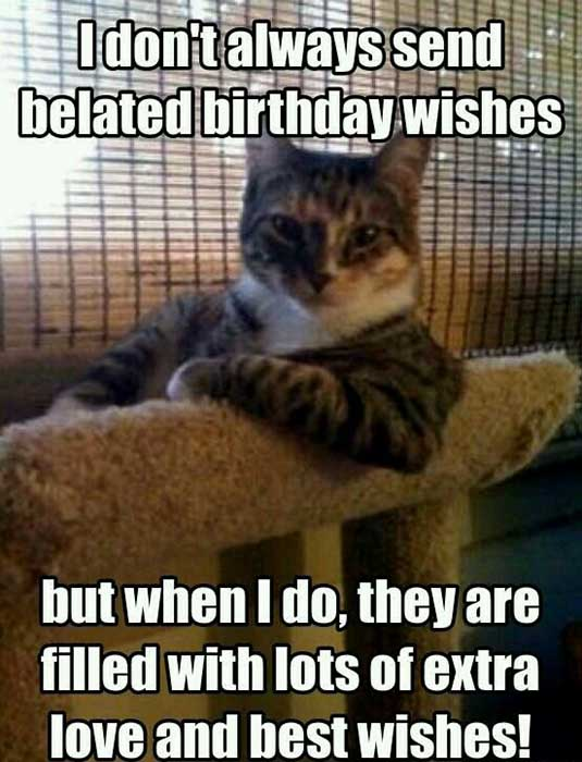belated birthday funny cat