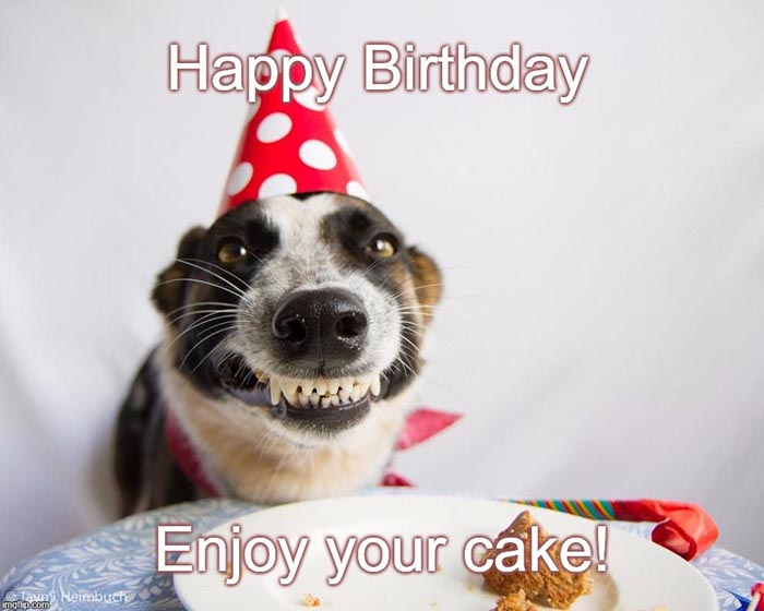 birthday cake dog meme