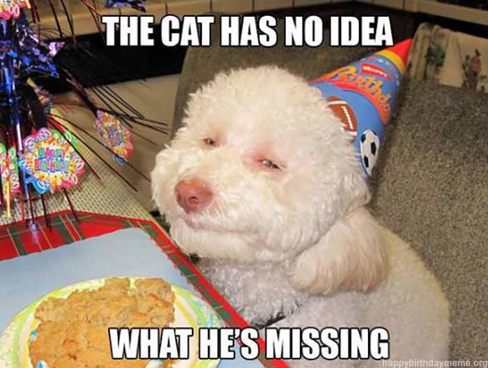 cbirthday-dog-meme-cat-have-no-idea-what-hes-missing
