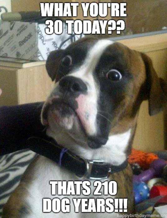 birthday dog meme funny 210 dog years