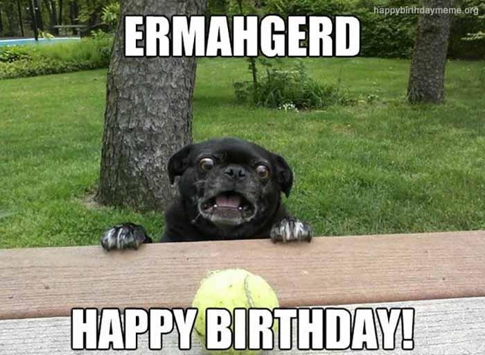 birthday dog meme