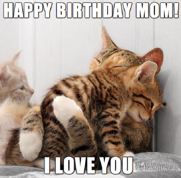 birthday mom cat meme