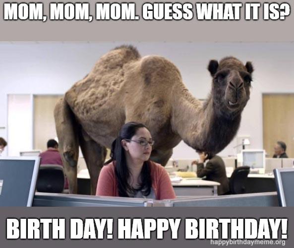 camel birthday for mom