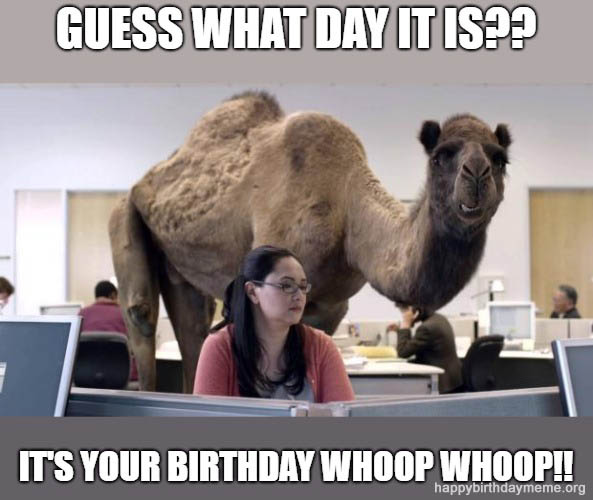 camel meme birthday the office