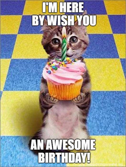 cat birthday meme