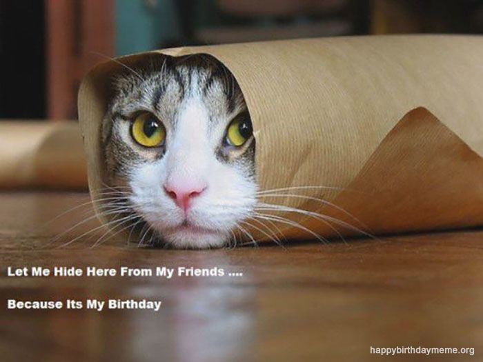 cat-happy-birthday-meme-funny