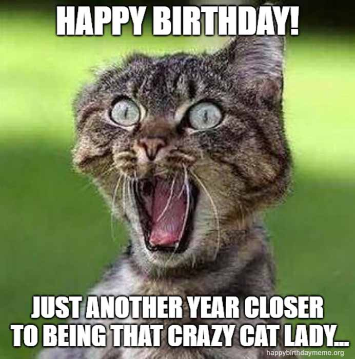 crazy cat lady meme birthday meme
