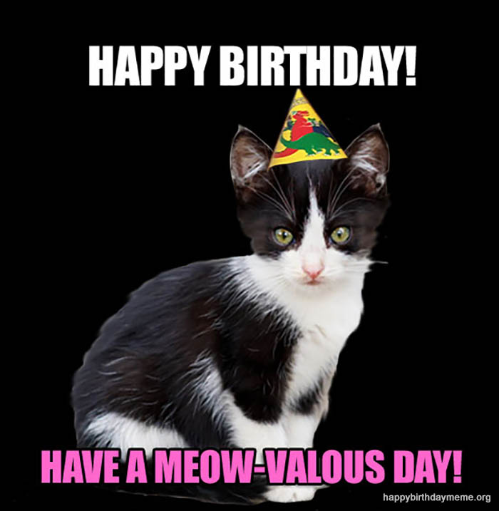cutest happy birthday meme