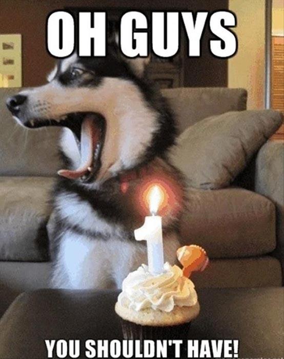 funny birthday dog meme