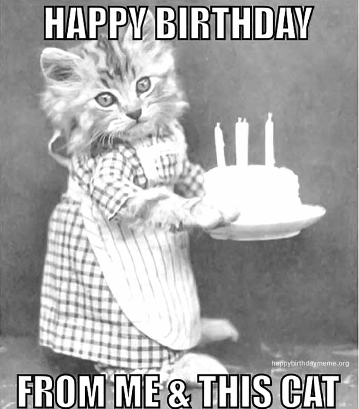 funny bithrday cat meme