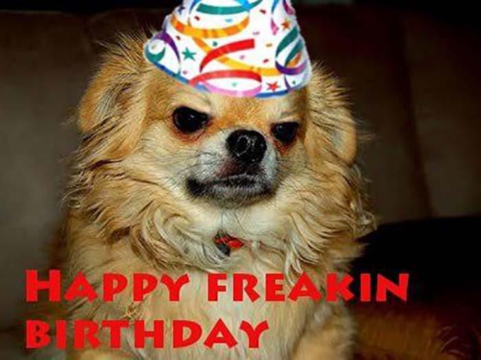 funny freaking birthday dog meme