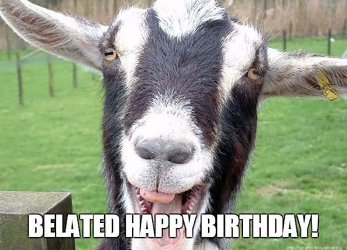 funny_goat_belated_birthday_meme1