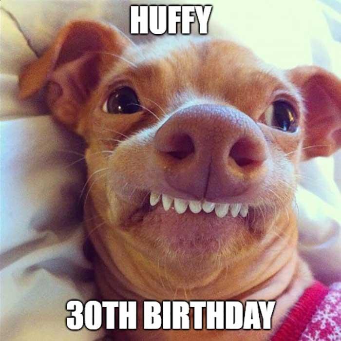 happy 30th birthday meme dog