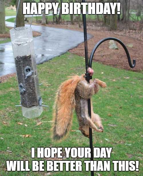 happy 50th birthday meme funny squirrel