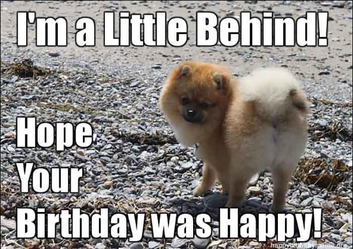 happy belated birthday funny dog