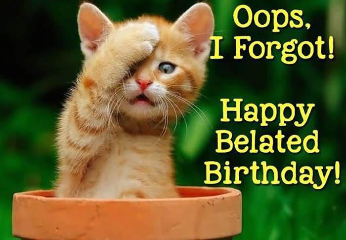 happy belated birthday meme cat
