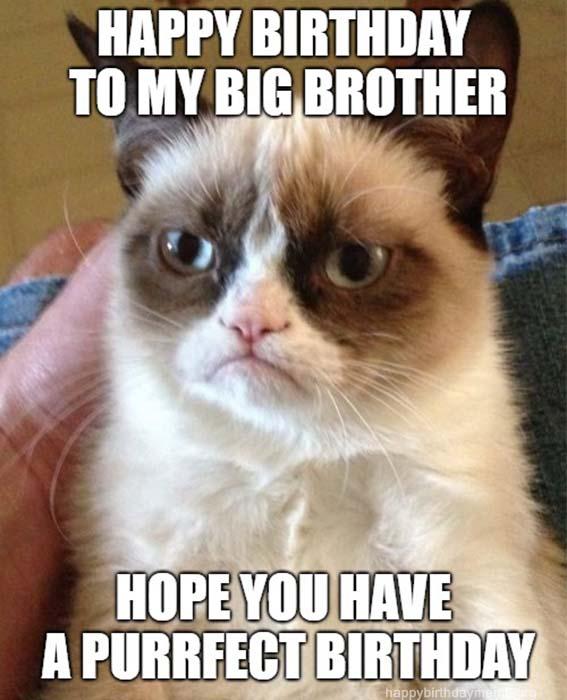 happy birthday brother cat meme