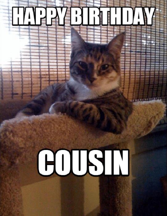 happy birthday cousin meme cat