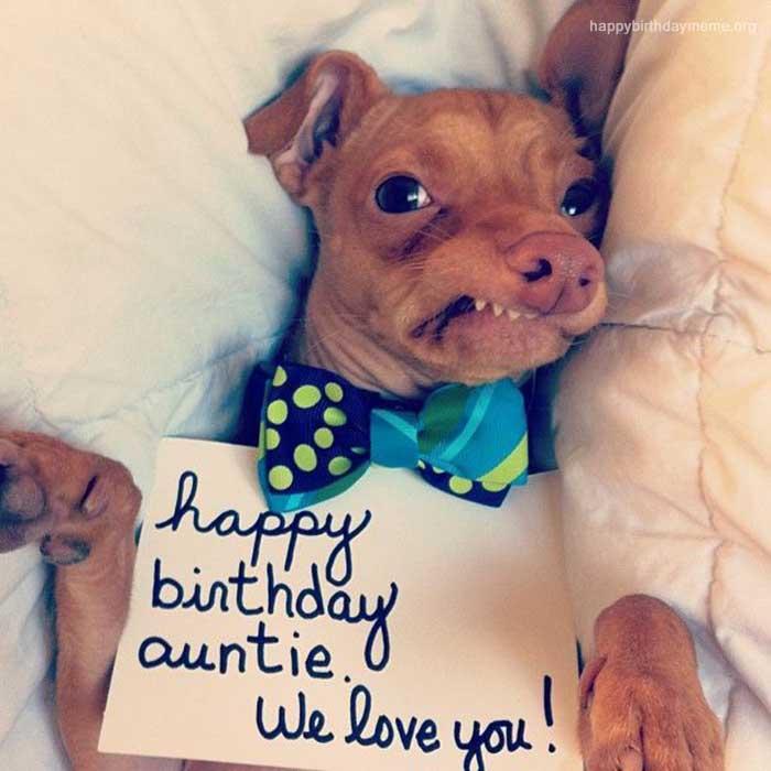 happy birthday dog meme funny auntie