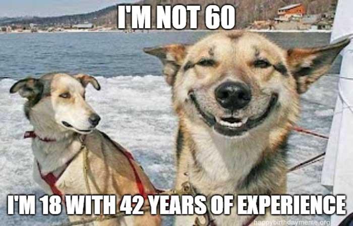 happy birthday meme 60th dog