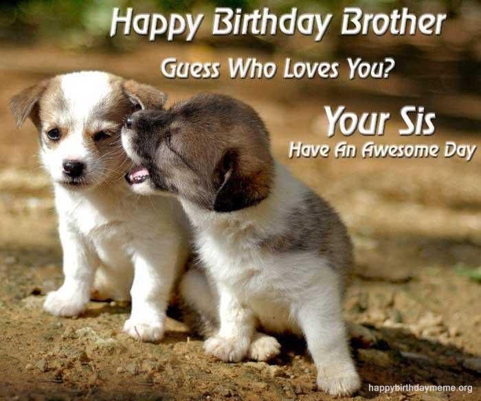 happy birthday meme brother little dog