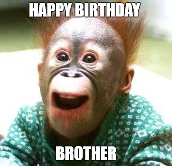 happy birthday meme brother monkey