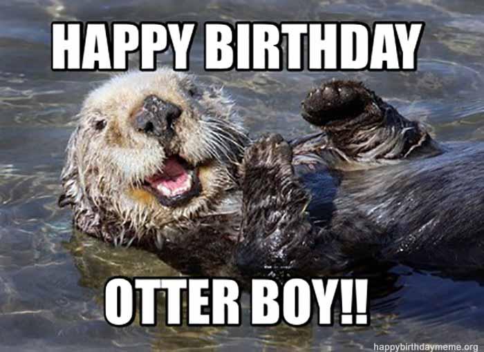 happy birthday meme brother pet
