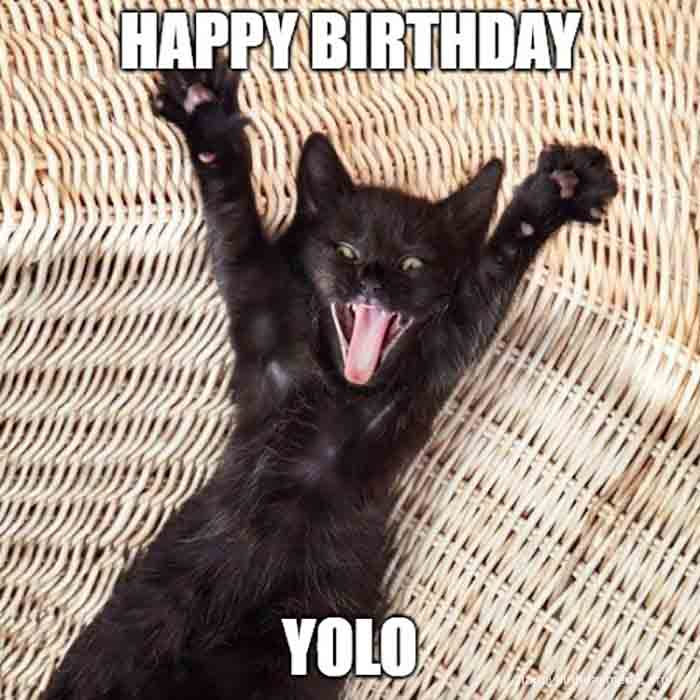 happy birthday meme cat yolo