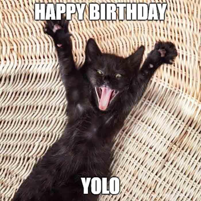 happy birthday meme cat yolo