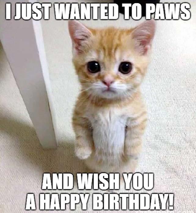 happy birthday meme cute cat