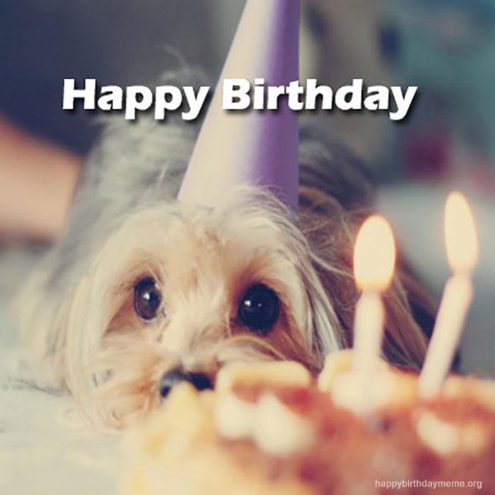 happy-birthday-meme-funny-cute-meme_small