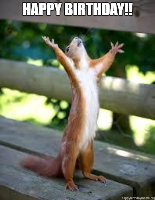 happy birthday meme squirrel