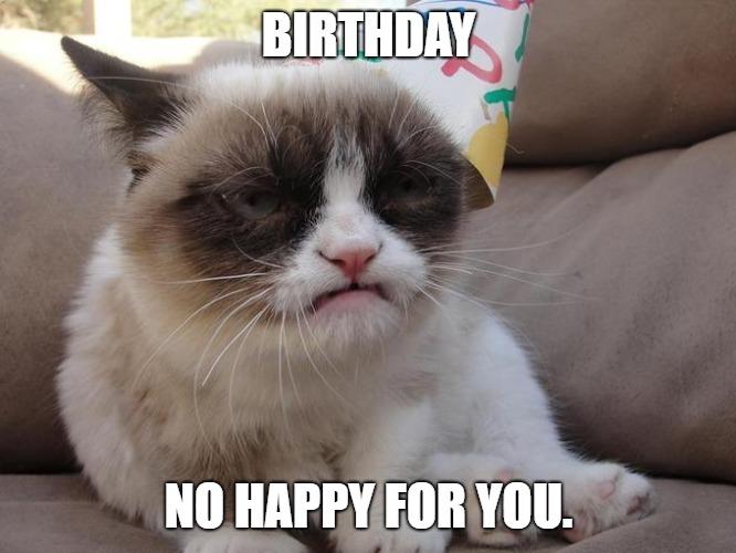 happy birthday memes cat