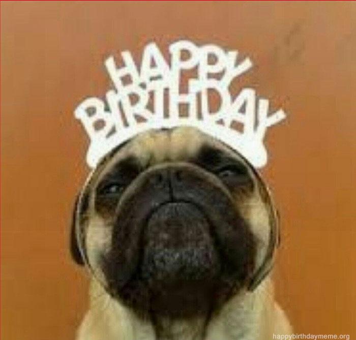 Happy Birthday Pug Meme