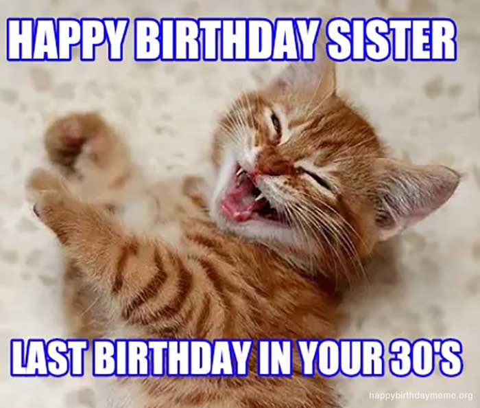 happy birthday sister cat meme