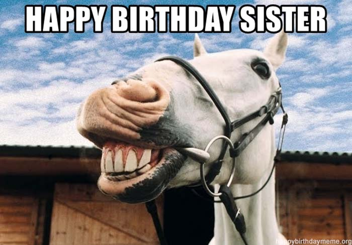 happy-birthday-sister horse