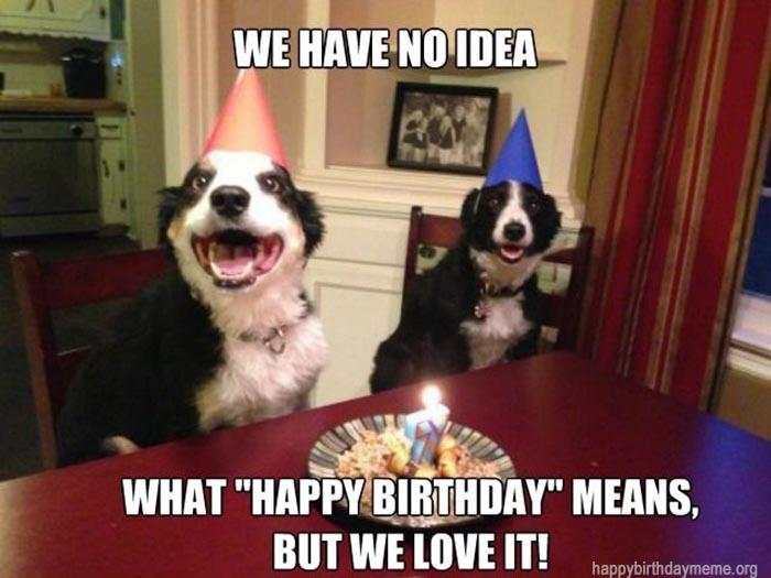 happy.birthday meme funny dog party
