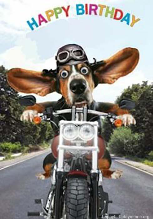 29 Funniest Happy Birthday Dog Meme - Happy Birthday Meme