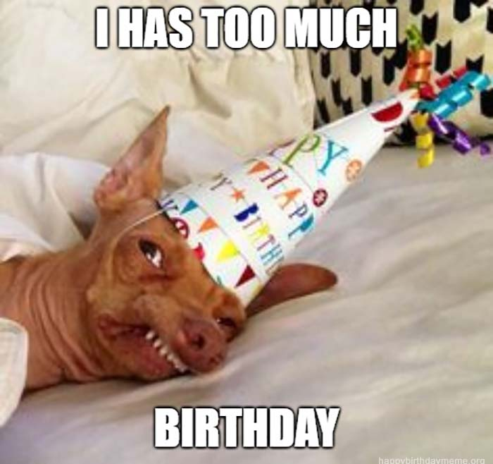i has too much birthday meme dog