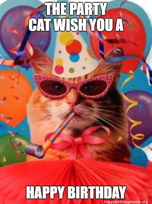 party cat meme happy birthday