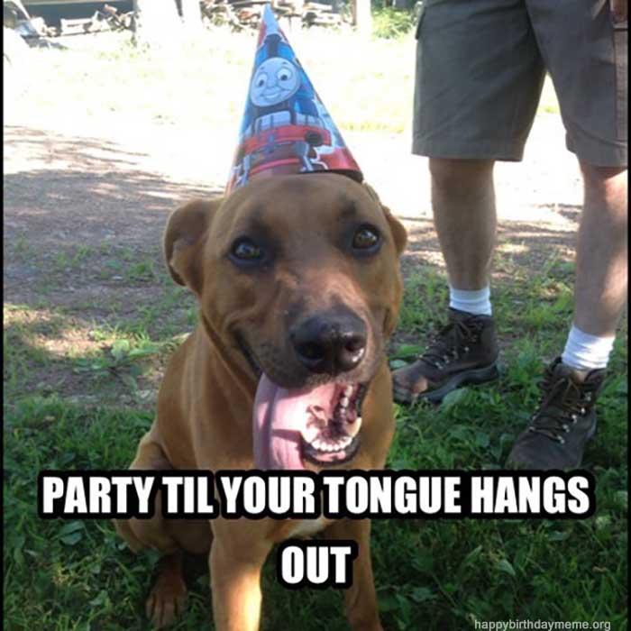 party_dog_happy_birthday_meme_dog1