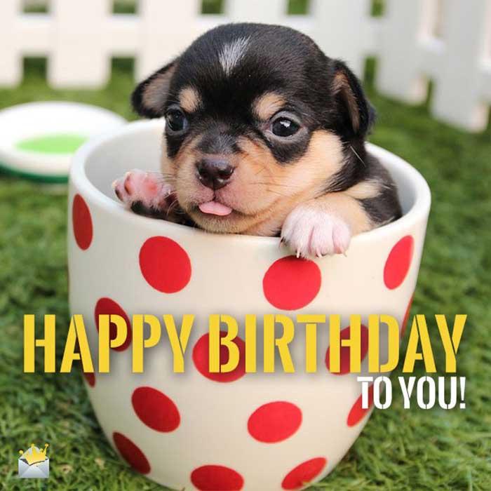 pics-photos-happy-birthday-dog-meme-happy-birthday