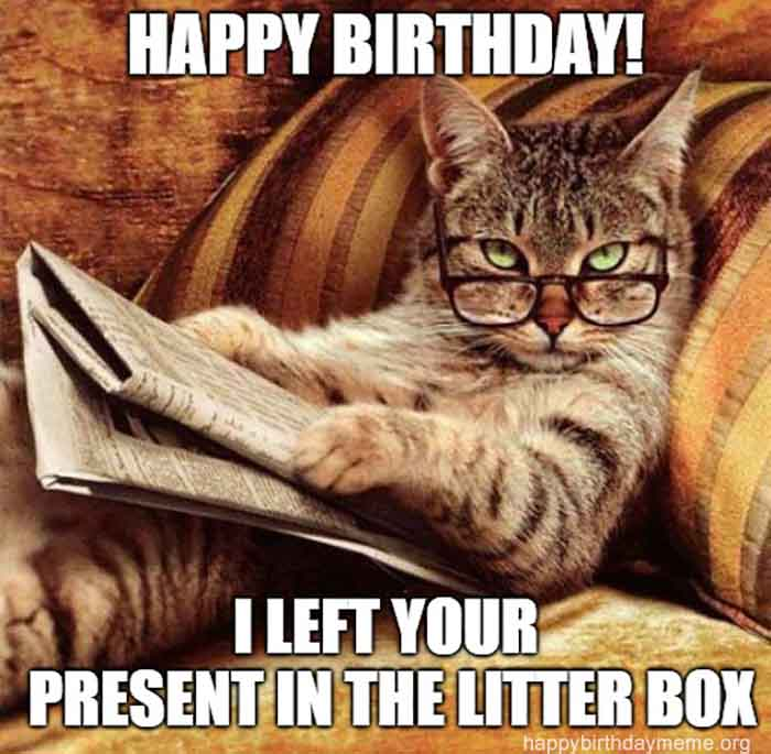 smart cat birthday meme