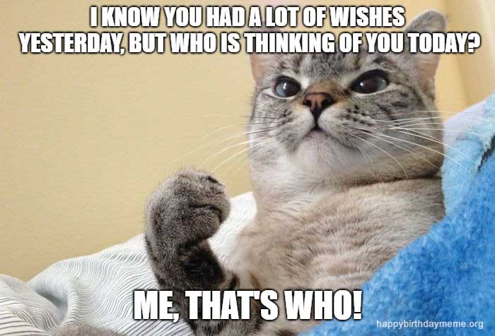 thinking cat birthday meme