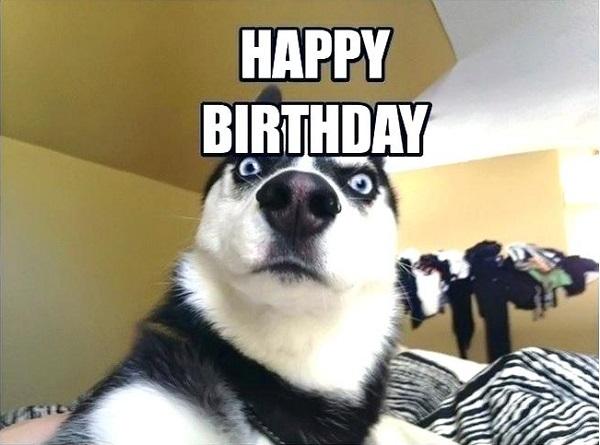 happy birthday dog meme for him funny