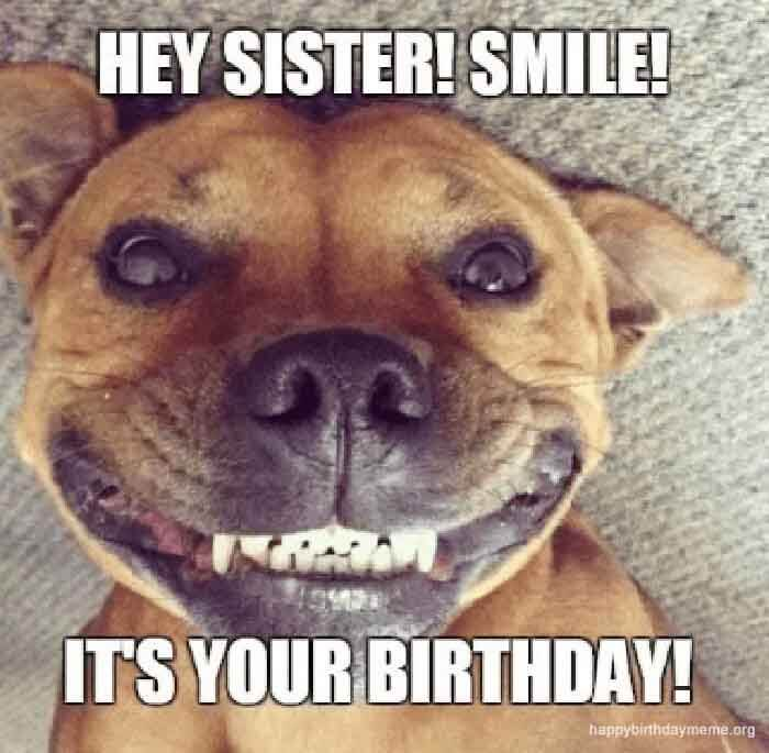 happy birthday sister dog memes